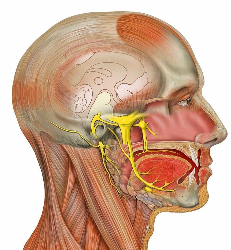 Голова и неврозы