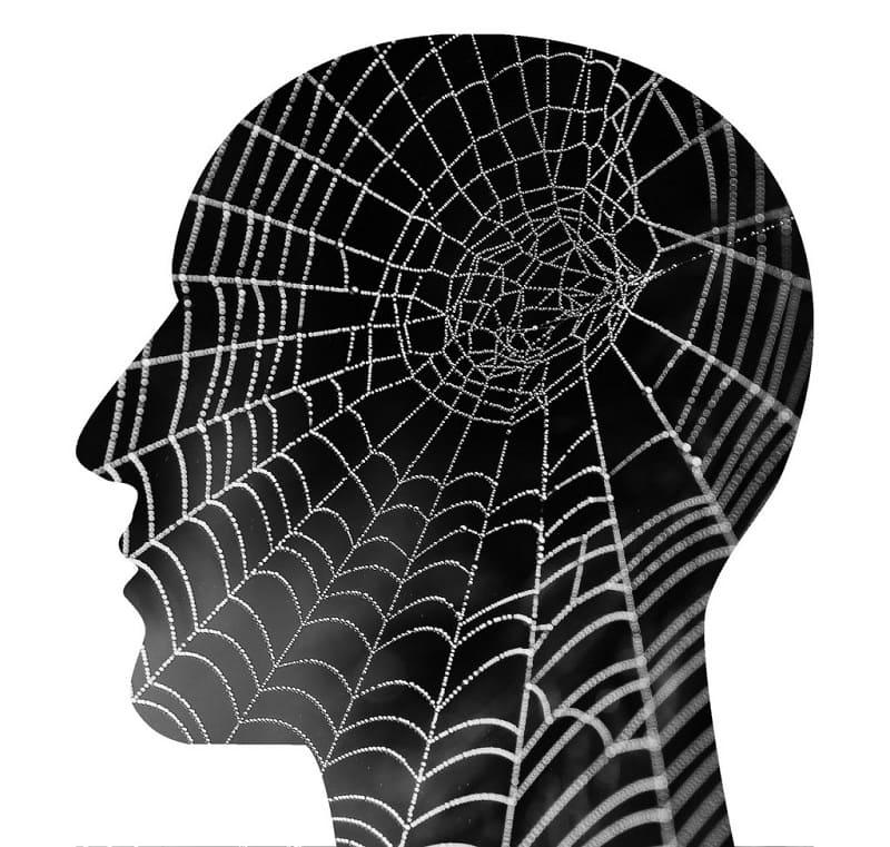 Боязнь пауков только в мозгу арахнофоба
